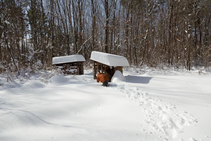 2/9  朝真っ白になった森に朝日が昇った_c0137403_1448316.jpg