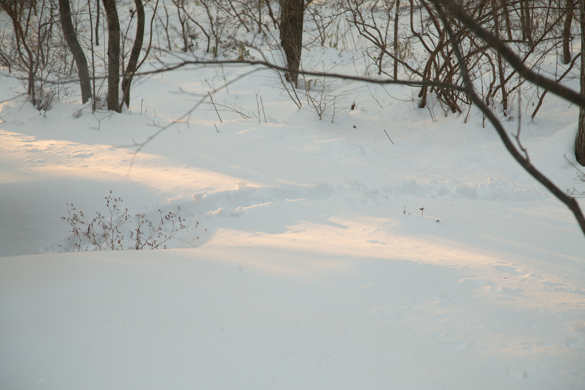 2/9  朝真っ白になった森に朝日が昇った_c0137403_14584343.jpg