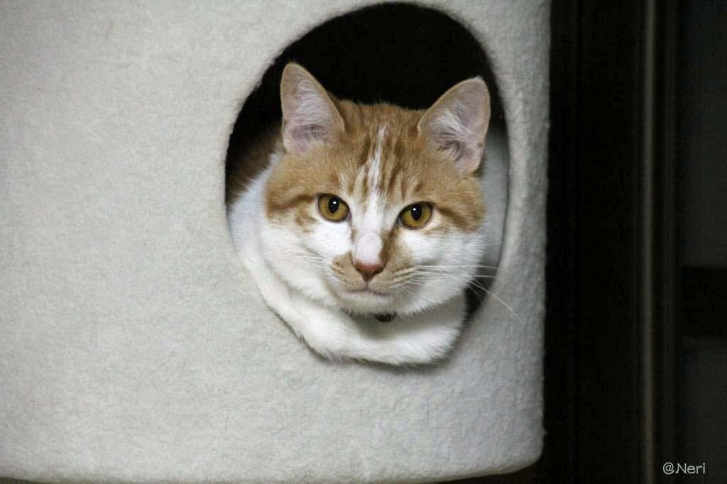 【猫】狭いとこ好き_f0141609_20374271.jpg