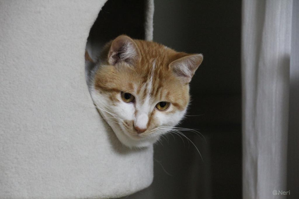 【猫】狭いとこ好き_f0141609_20374444.jpg