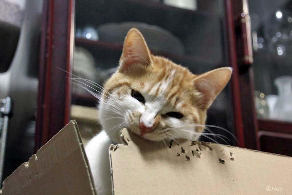 【猫】狭いとこ好き_f0141609_20383446.jpg