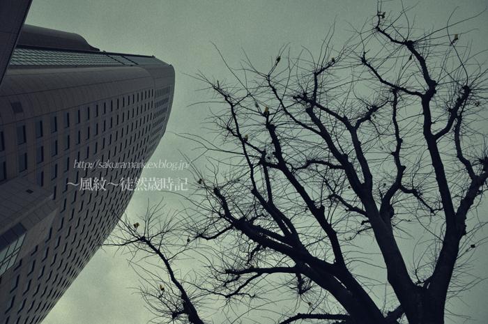 街角、冬枯れ、曇り空・・・。_f0235723_20152951.jpg