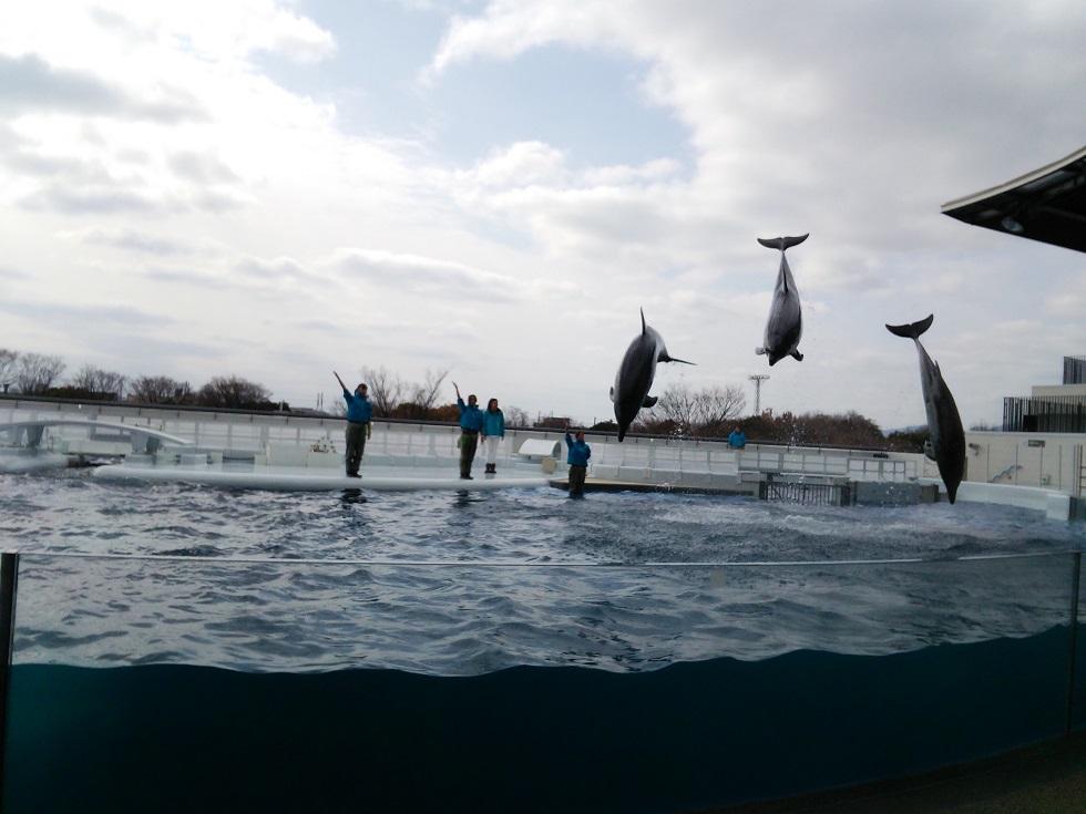 京都水族館で遊ぶ_c0010936_15283633.jpg