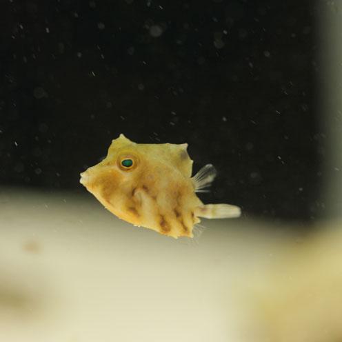 海水魚アップしました!_d0221436_19402392.jpg