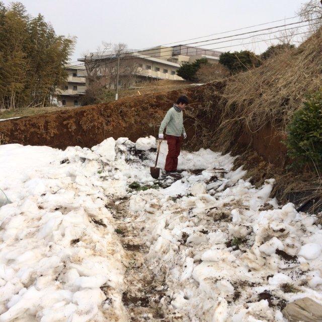今朝は4人体制・・・TさんNさん&Sさんと飯田です・・一輪車の通る道を作ります_c0222448_14412765.jpg
