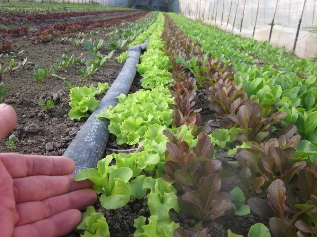 農薬洗い_e0181260_2157482.jpg
