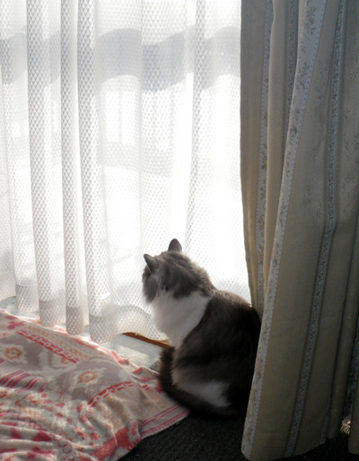 餌を待つ雀と、窓の向こうの雀を見るチョビなど♪_a0136293_19444123.jpg