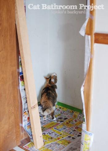 猫のトイレ、改造プロジェクト その1_b0253205_2522375.jpg