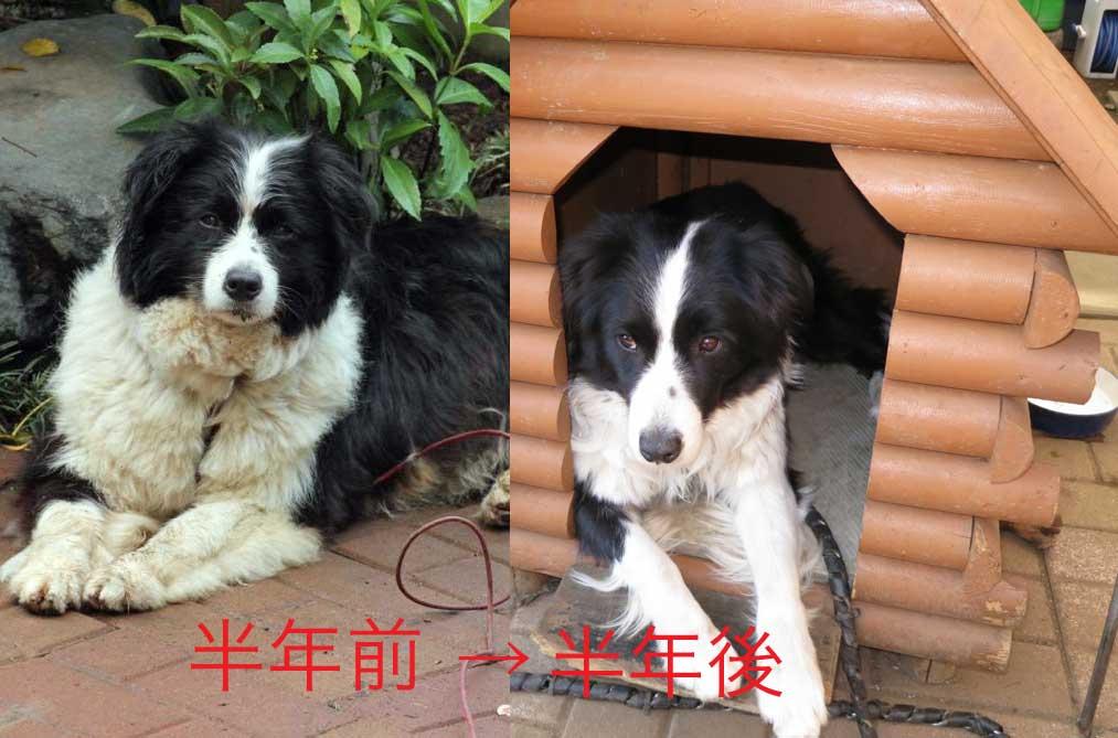 【犬】変わりました?_f0141609_233511.jpg