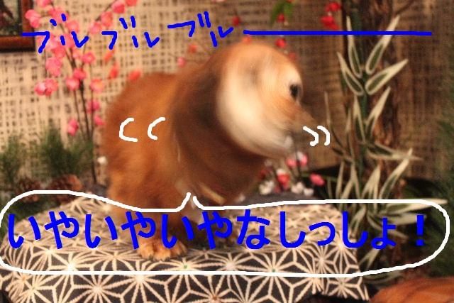 b0130018_1523571.jpg