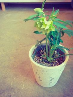 今週の鉢物さん_b0209477_18403681.jpg