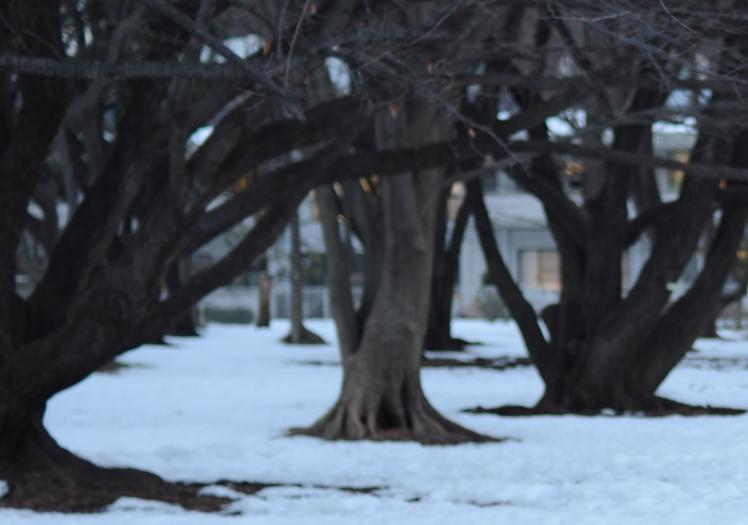 冬のなかの詩人_b0194880_192370.jpg