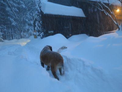 観測史上最高の積雪量となった雪の日_d0133485_1613956.jpg