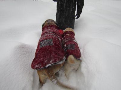 観測史上最高の積雪量となった雪の日 (part2)_d0133485_1615364.jpg