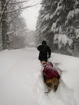 観測史上最高の積雪量となった雪の日 (part2)_d0133485_16154434.jpg