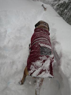 観測史上最高の積雪量となった雪の日 (part2)_d0133485_16162857.jpg