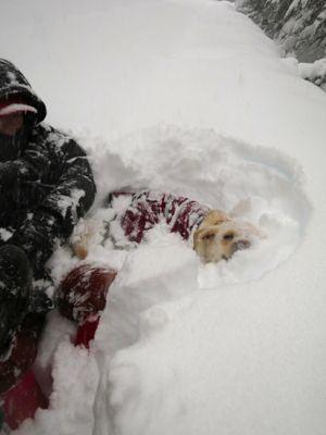 観測史上最高の積雪量となった雪の日 (part2)_d0133485_16201894.jpg