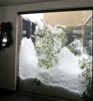 観測史上最高の積雪量となった雪の日 (part2)_d0133485_16265181.jpg