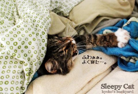 二度寝から、三度寝へ_b0253205_226462.jpg