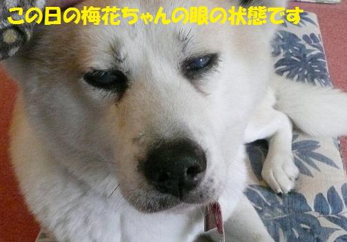 f0121712_1429670.jpg