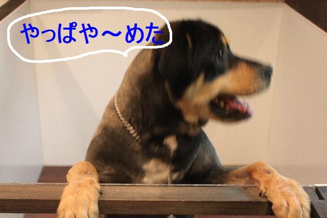 b0130018_22362147.jpg