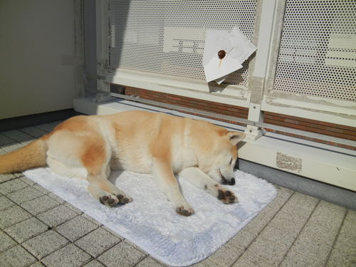 '14,2,22(土)亀田病院と愛とこころ!_f0060461_1433885.jpg