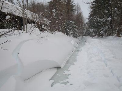 観測史上最高の積雪量となった雪の日 3日目_d0133485_14102567.jpg