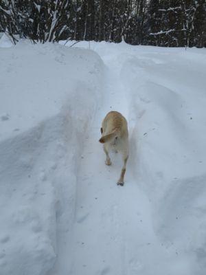 観測史上最高の積雪量となった雪の日 3日目_d0133485_1414424.jpg