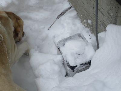 観測史上最高の積雪量となった雪の日 3日目_d0133485_14243314.jpg