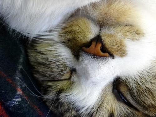猫の日のHuu&チョビ、元気~~♪♪♪_a0136293_1722436.jpg