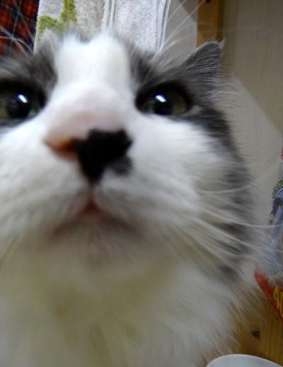 猫の日のHuu&チョビ、元気~~♪♪♪_a0136293_1818168.jpg