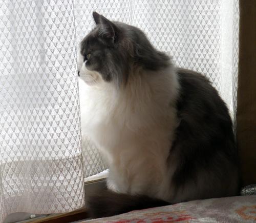 猫の日のHuu&チョビ、元気~~♪♪♪_a0136293_18414287.jpg