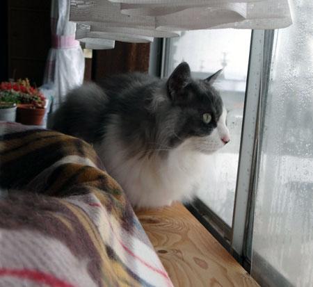 猫の日のHuu&チョビ、元気~~♪♪♪_a0136293_18441432.jpg