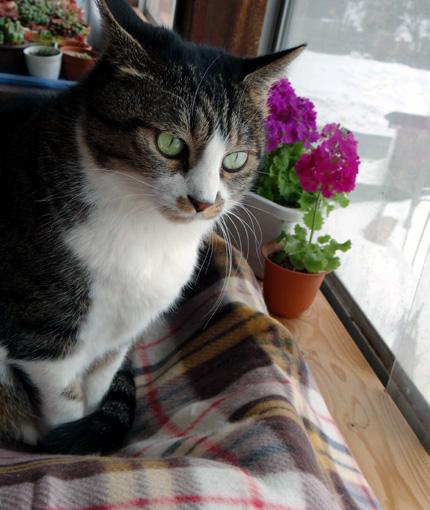 猫の日のHuu&チョビ、元気~~♪♪♪_a0136293_18462842.jpg