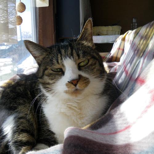 猫の日のHuu&チョビ、元気~~♪♪♪_a0136293_18484858.jpg