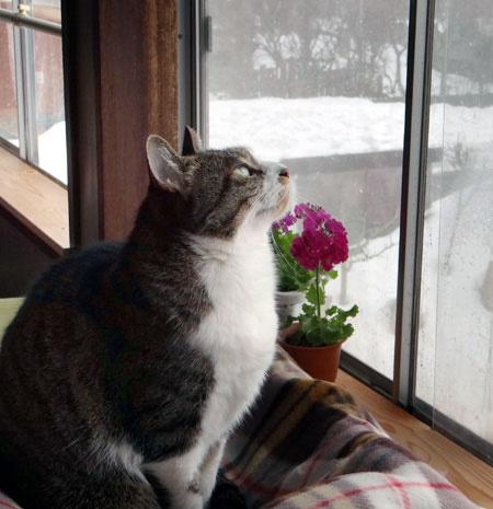猫の日のHuu&チョビ、元気~~♪♪♪_a0136293_1850071.jpg