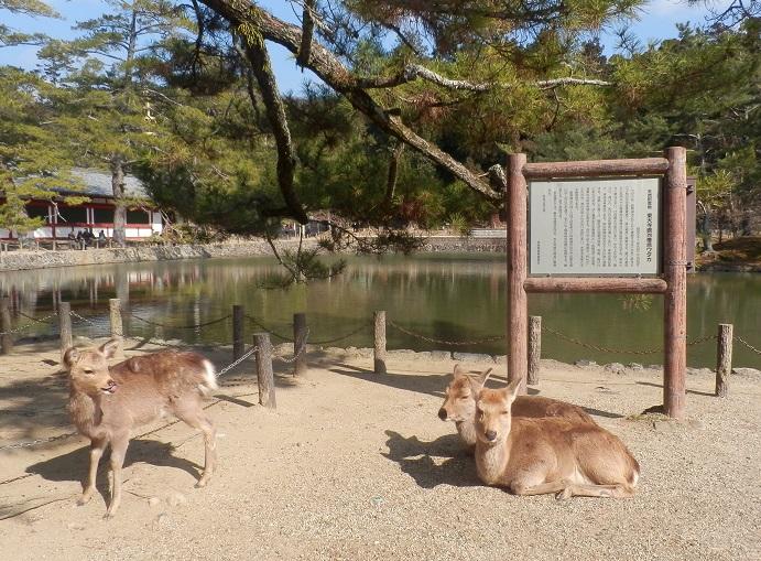 奈良に行くのは 何年ぶりでしょうか・・・_c0098501_23292687.jpg