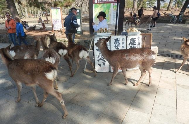 奈良に行くのは 何年ぶりでしょうか・・・_c0098501_2332499.jpg