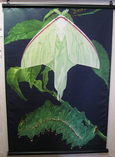 たまごの工房企画展 第4回 - mozo mozo - 虫・蟲 展 その6_e0134502_13340671.jpg