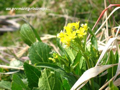 希望をくれる、早春の花たち・・・☆_c0098807_19461698.jpg