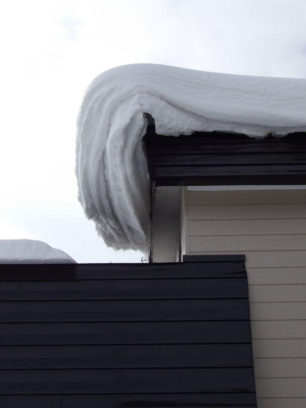 今年になって初めて冬日を脱するか?_c0025115_20553030.jpg