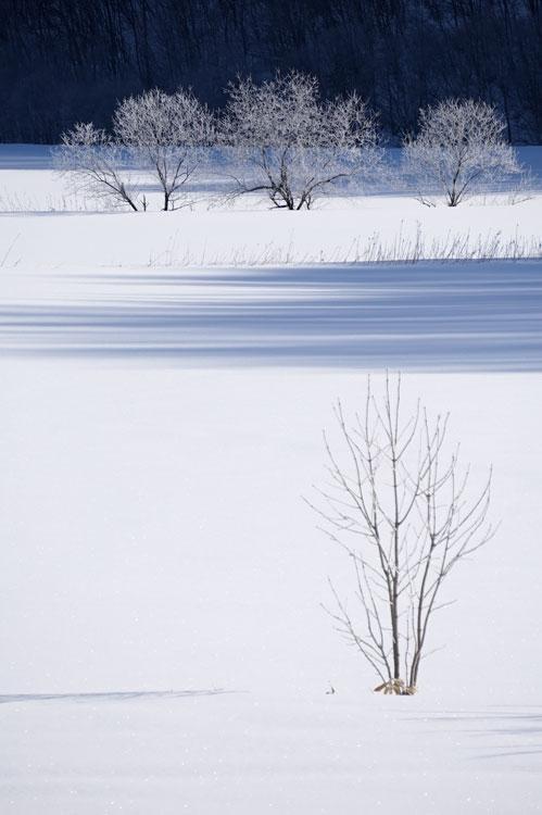 f0116528_20105626.jpg