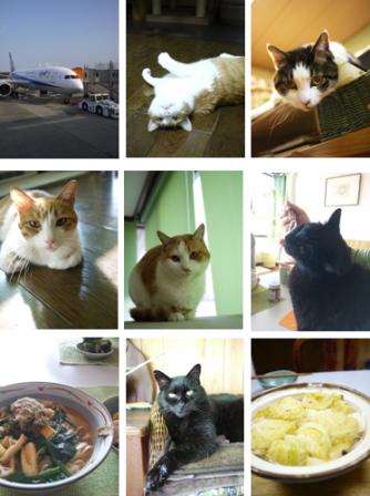 猫の森株式会社 東京都渋谷区千駄ヶ谷。_a0143140_21171765.png