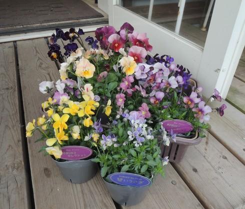 まだ、かわいい花たちがあってほんとによかった!!_b0137969_1952073.jpg