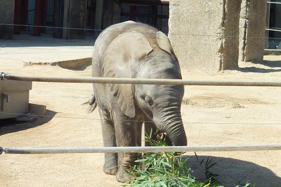 廃棄される竹を動物園へ・・・ _e0272869_22430525.jpg