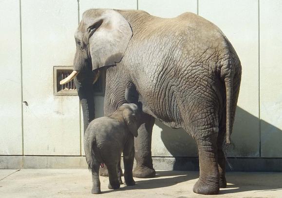 廃棄される竹を動物園へ・・・ _e0272869_22431517.jpg