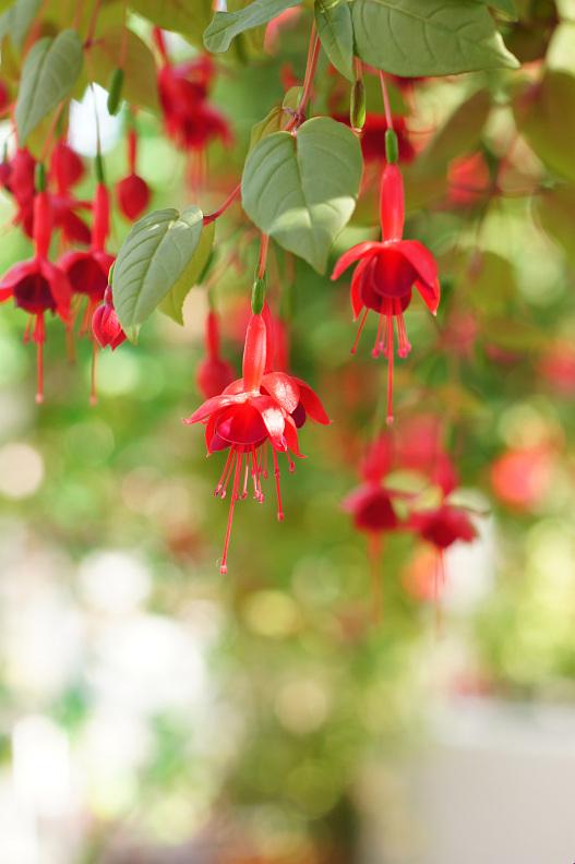 植物公園で春探し_f0189086_20134782.jpg