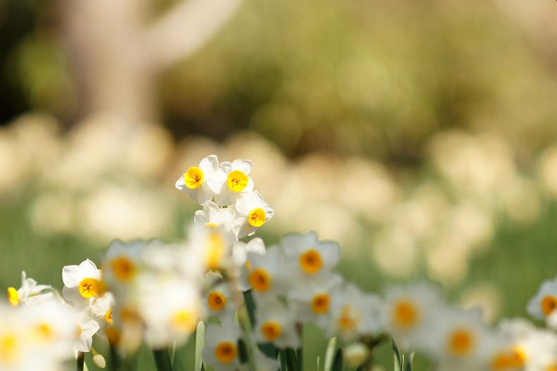 植物公園で春探し_f0189086_2052352.jpg