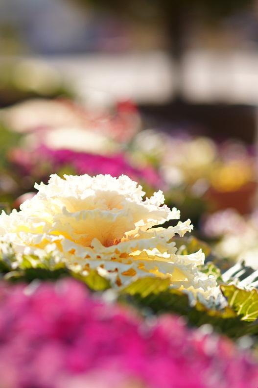 植物公園で春探し_f0189086_2053891.jpg