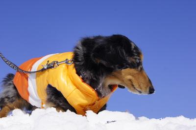 インフルな人と元気な犬_f0195891_20233934.jpg